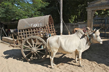 Taxi Senderuela